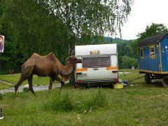 Ciągnik dla przyczep campingowych